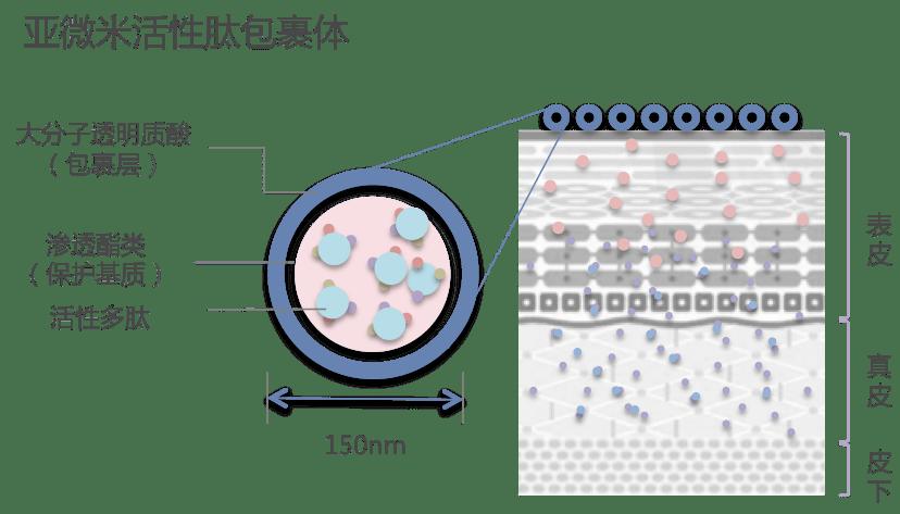 亚微米活性肽包裹体