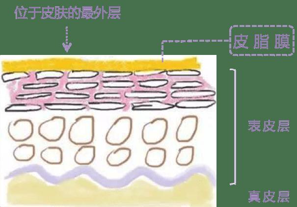 皮脂膜的位置和作用
